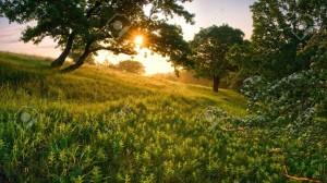 12604945-Al-mattino-nella-foresta-attraverso-un-albero-il-sole-splende-Archivio-Fotografico